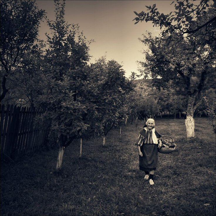 Fall's fruits