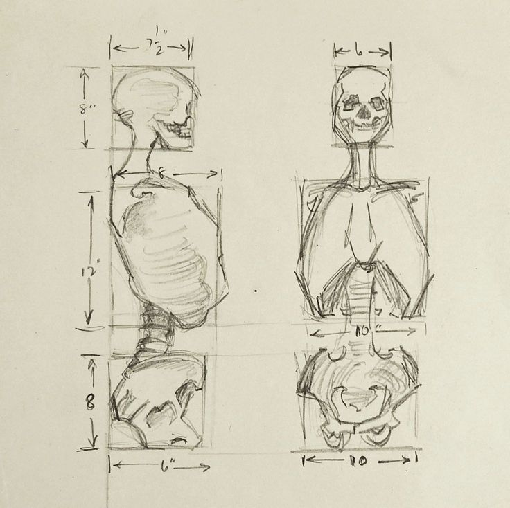 """Pencil on paper human anatomy study of skeleton. Unsigned. Unframed, age toning, light creasing. 8"""" L x 10"""" H"""