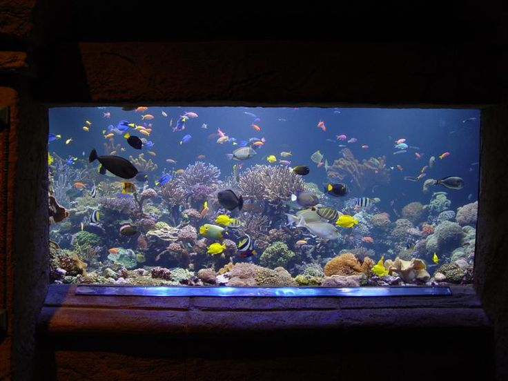129 best fish tank inspiration images on Pinterest Saltwater