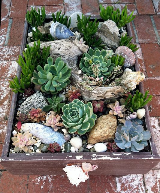 Beach style succulent planter with driftwood and seashells-pretty!