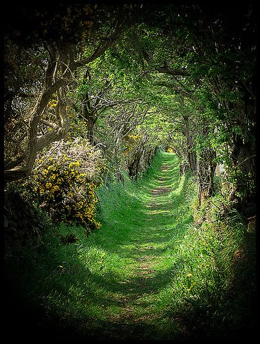 The old road that leads to an ancient stone circle, a beautiful & magical place, Ballynoe, Co.Down, Ireland.