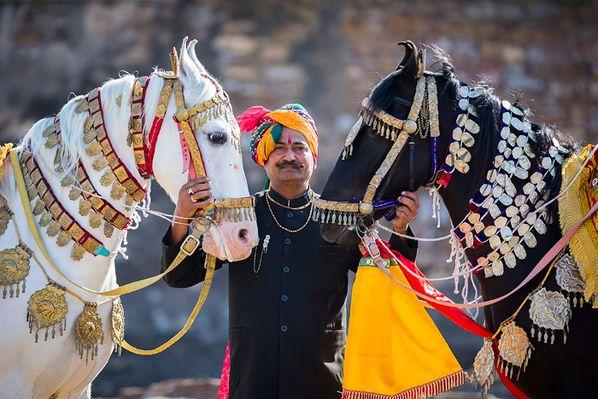 marwari zucht | Reiten und fotografieren im Land der Marwaris