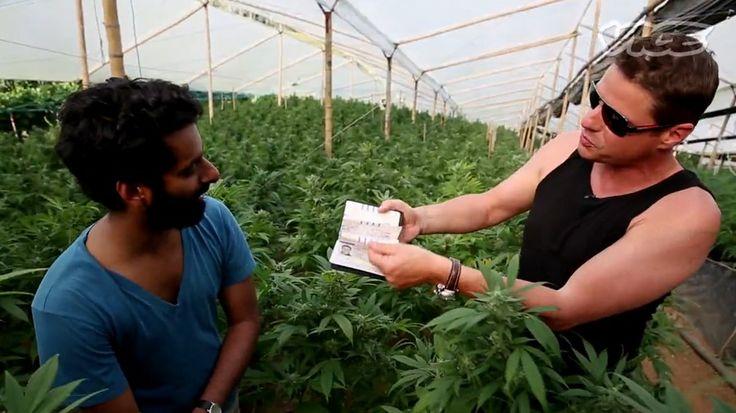 Os Reis da Cannabis - Expedição aos cultivos colombianos