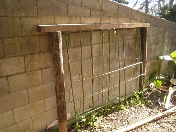 By October I made a bamboo trellis to take peas. I thought the concrete wall from the stadium would provide extra warmth.