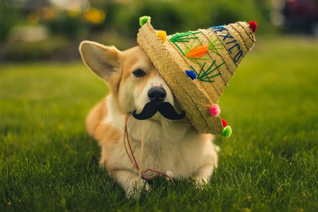 Cinco de Wally---I used to have a hat just like that one