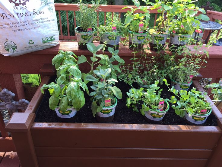 "@BonniePlants Herb Garden I Just planted in my #ContainerGarden 'OuiBuilt"" and I stained! #G2B15"