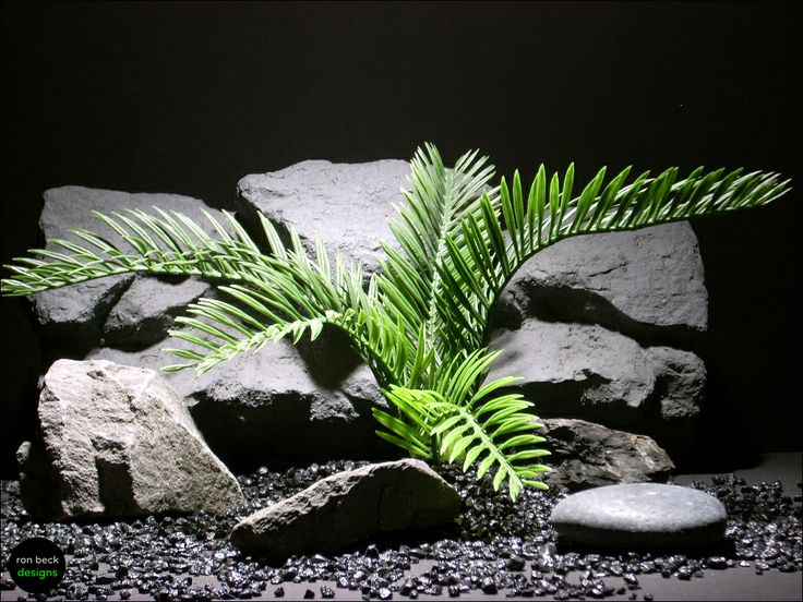 29 best Conifers, cycads and allies (Gymnosperms) images on ...