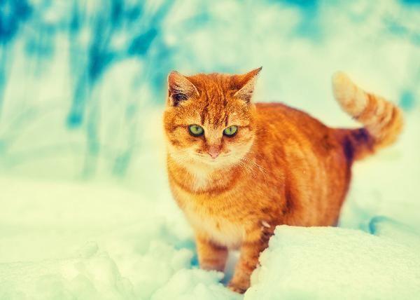 Pin On Cat Lovers Noahbulandres