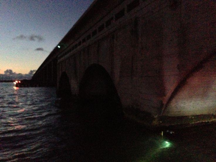 Early AM dive under the bridges