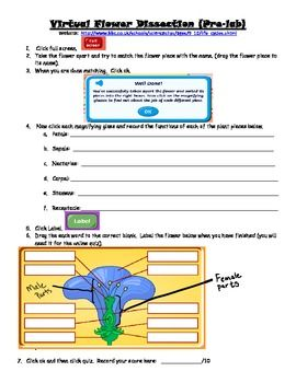 this resource includes two activities virtual lab dissection of a flower students use a bbc. Black Bedroom Furniture Sets. Home Design Ideas