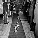 You don't have to stay at the Peabody hotel to see the procession of the ducks on the red carpet to/from the fountain.