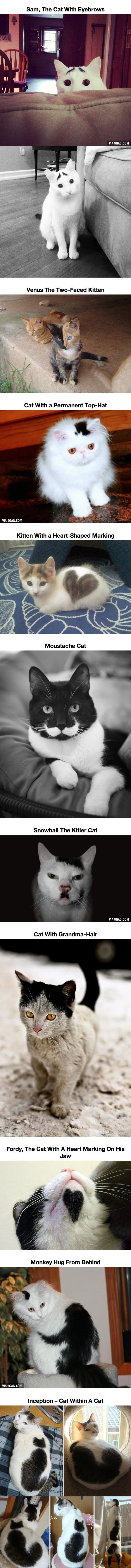10 Cats That Got Famous For Their Awesome Fur Markings | See more about furs and cats.