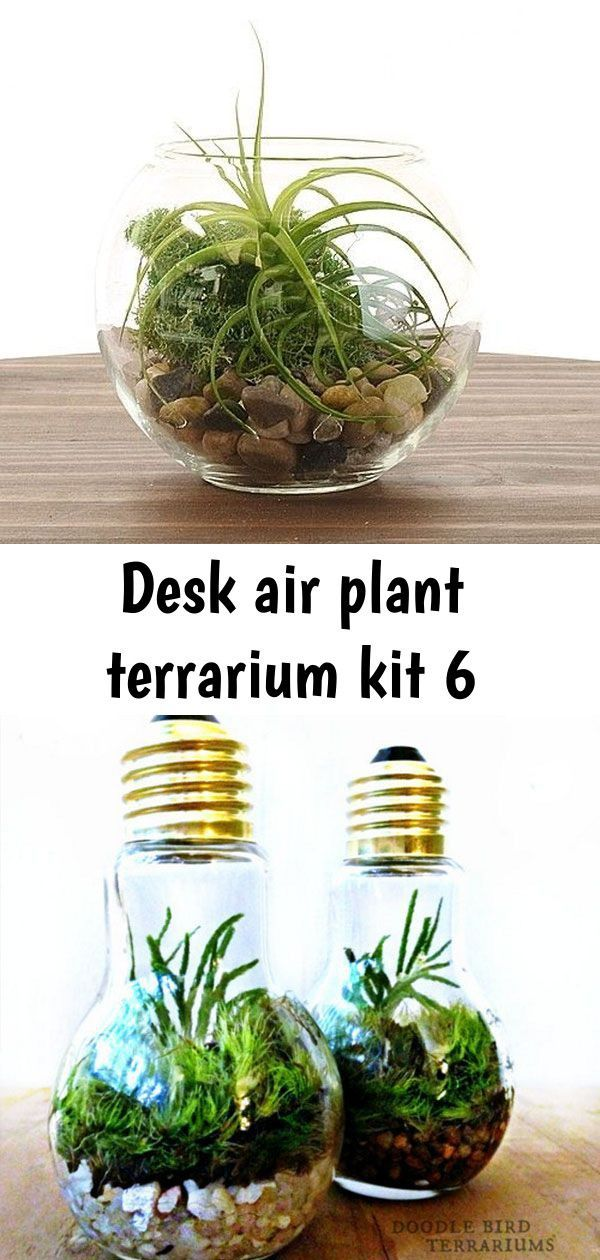Desk Air Plant Terrarium Kit Desktop Terrarium Scene Apollobox Sukkulenten Fur Das Minigewachshaus Terrarium Plants Air Plants