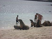 Islas Galápagos - Turistas con leones de mar en una playa de la isla San Cristóbal.