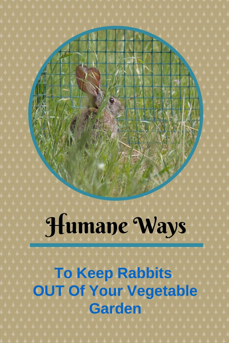 4 Ways To Keep Rabbits From Ruining Your Garden Rabbit Gardening Tools And Gardens