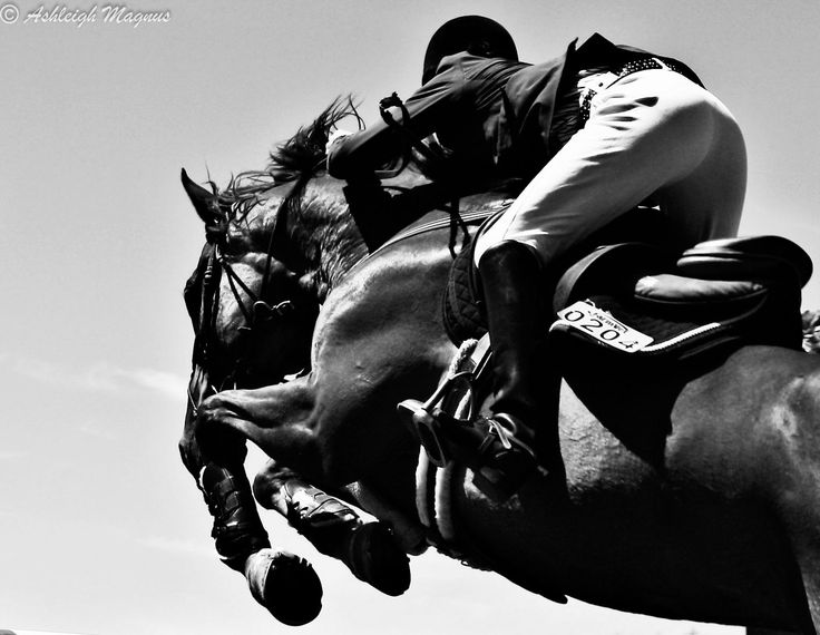 Black And White Horse Jumping Photography | www.imgkid.com ...