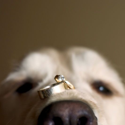 "Why We Love It:  This might be the cutest ring photo we've ever seen.Why You Love It: ""Because our four-legged friends are important parts of the family, too!!"" —Jenny Y. ""Because I can't wait for our special day, surrounded by our furry children."" —Anggela A. ""This is the cutest ring bearer and shot I've ever seen!"" —We Do WeddingsPhoto Credit: Jeff Cooke Photography"