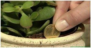 Znáte tuto rostlinu? Nejen, že se jí přezdívá strom bohatství, má také všestranné využití jako přírodní medicína. Tuto rostlinu jednoznačně potřebujete mít doma! - ProSvět.cz