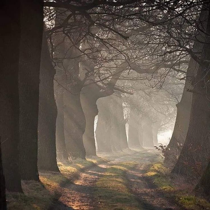 Enchanted Forest by Ela Kaps