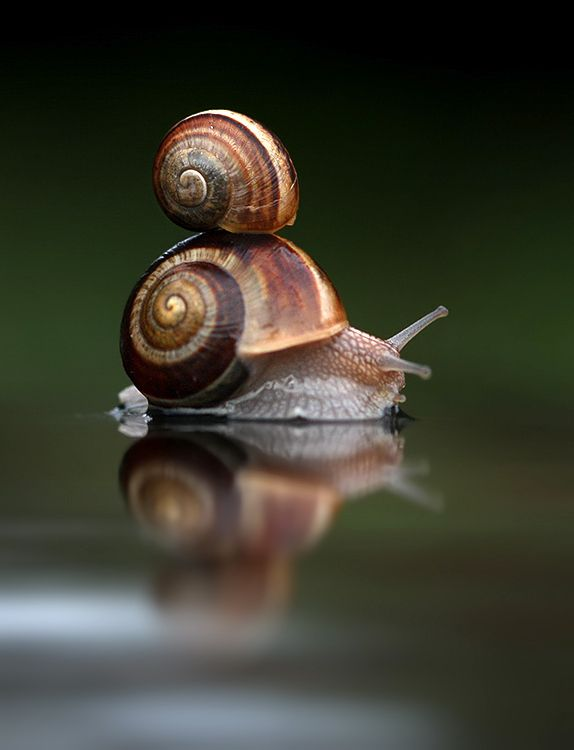 i have not seen a snail in years... I wanna see one now!!!