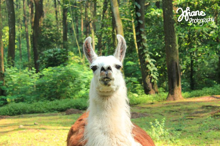 Hello, I'm Mr Alpaca