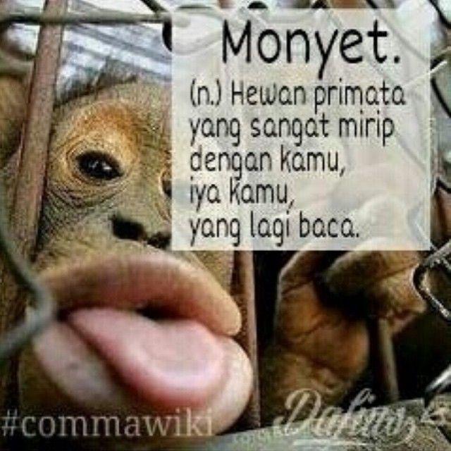 comma wiki #monyet