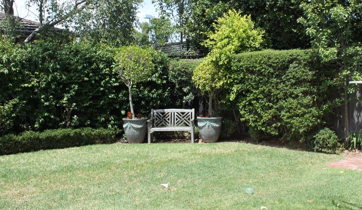 Existing Lilly Pilly Hedge and Pear trees to be retained
