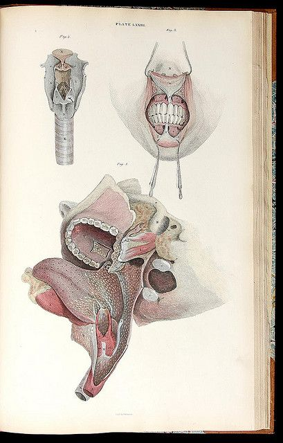 love a medical illustration