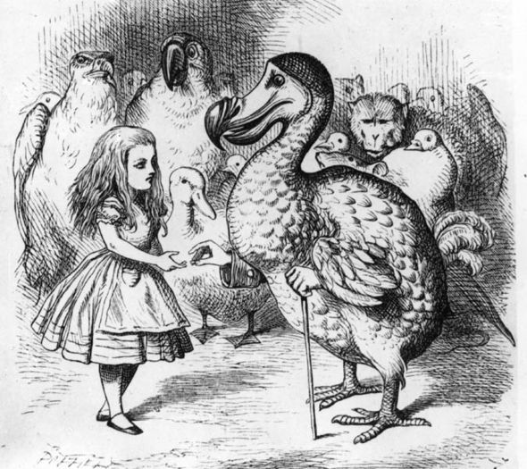 17 Best Images About Go Ask Alice On Pinterest Lewis
