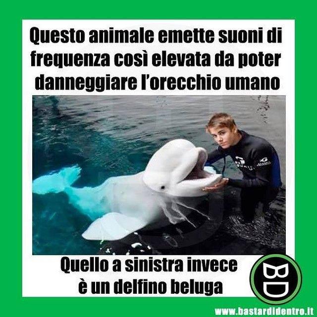 L'angolo degli animali... rumorosi! #bastardidentro #justinbieber #delfino www.bastardidentro.it