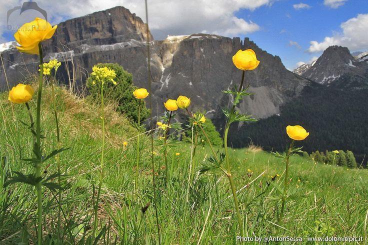 Landscape #Pordoi #Dolomites #ValdiFassa