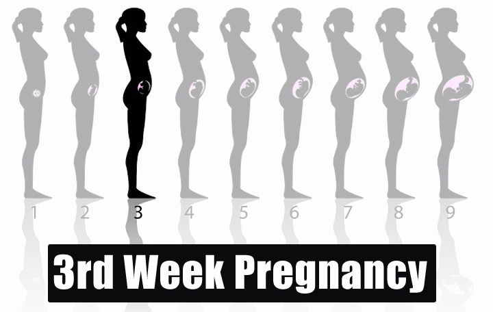 3rd Week Pregnancy - Symptoms, Baby Development, Tips And Body Changes