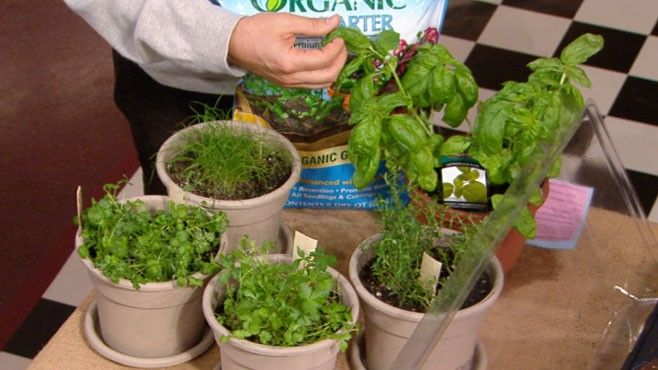 Video: Organic Gardening magazine's contributing editor Matthew Benson shows you how to start an indoor herb garden and offers growing tips for 10 of the most popular herbs. | From Good Morning America