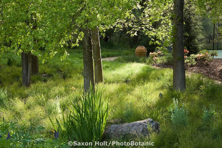 Grass Lawn Substitute Sedge Meadow Carex Divulsa C