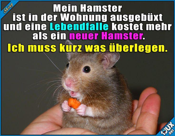 Lustige Hamster Sprüche