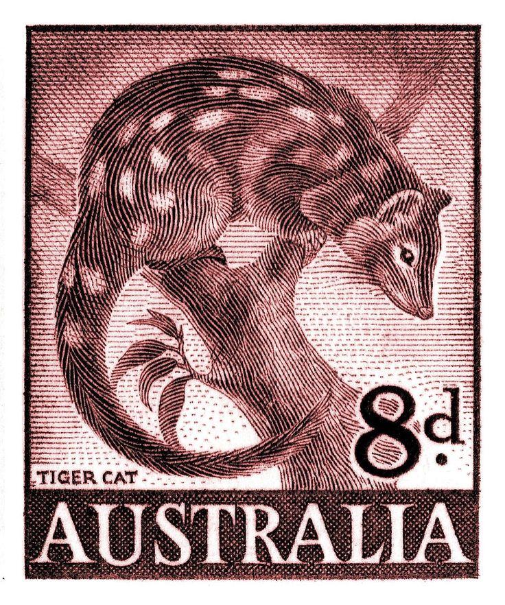 1959 Australia Tiger Cat Postage Stamp,tiger quoll,spotted-tail quoll,dasyurus,australia,outback,vintage,postage stamp,fauna,mayo,postal,ephemera,uluru,ayers,wildlife,nature,engraving,native,ozzie,native,endangered species,conservation