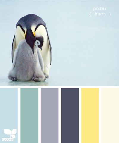 polar hues. It seemed strange to see the golden yellow strip with the other color strips. But then I looked at the penguins and remembered that it was this particular color combination that enamoured me about the penguins. I would like to do this color scheme for a room and see what what it would be like. It depends on what are the primary colors & which are the pops of colors.