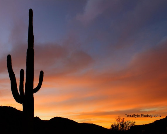 fine art photography home decor saguaro desert sunset tucson arizona - Home Decor Tucson