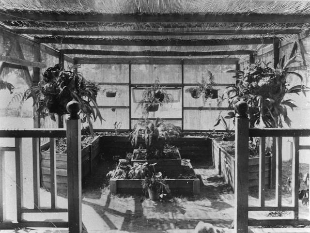 Interior of a greenhouse in Queensland, via Flickr.