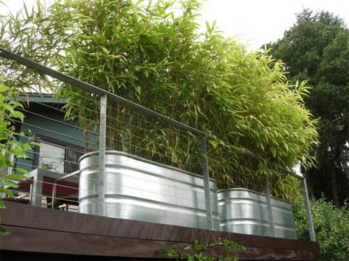 growing bamboo in troughs - Google Search