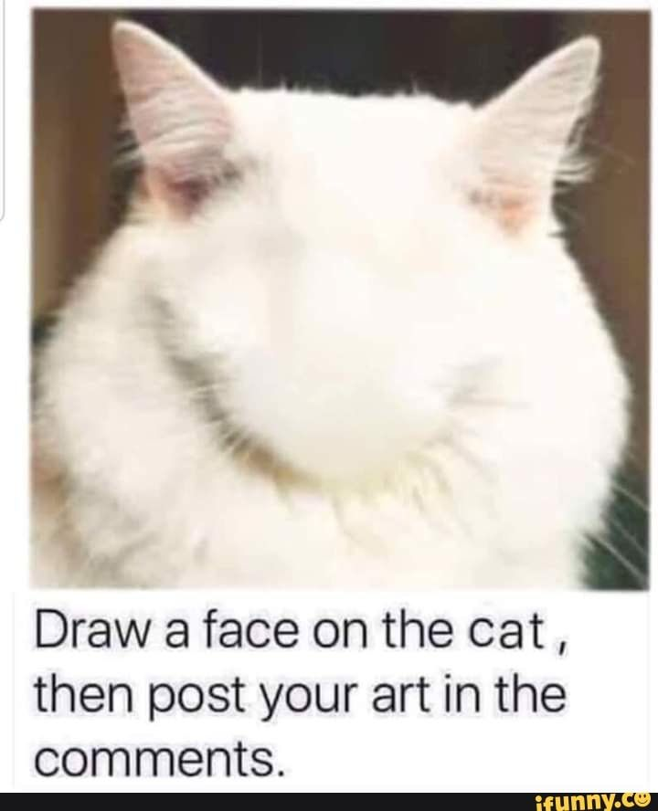 Draw A Face On The Cat Then Post Your Art In The Comments Ifunny Funny Cat Memes Funny Animal Memes Cats