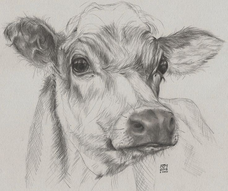Quick drawing of a cow, donated to a charity to raise funds to feed farm animals affected by flooding. nice work.