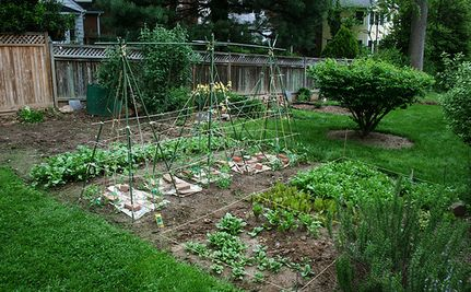 Bringing Garden Fresh into Food Banks