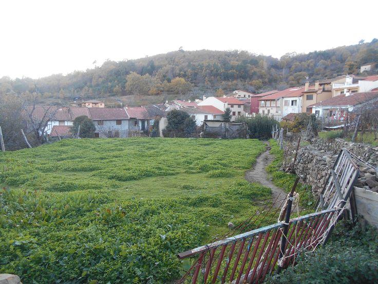 Villanueva del  Conde. Huertas centrales.