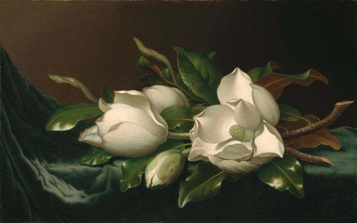 Martin Johnson Heade  American, 1819-1904, Magnolias on Light Blue Velvet Cloth