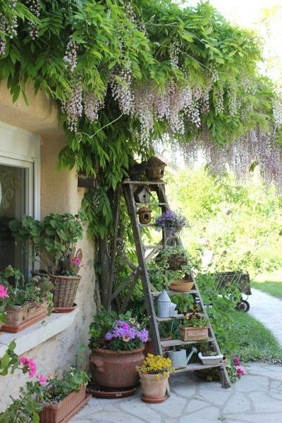 A little bit of garden whimsy with a wooden ladder as planter with lavender wisteria hanging above.