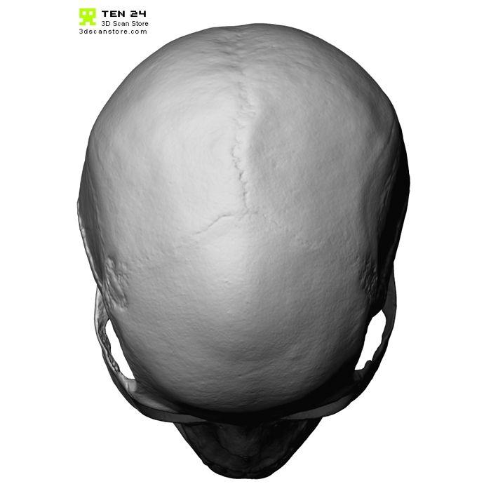 Male / Female skull bundle