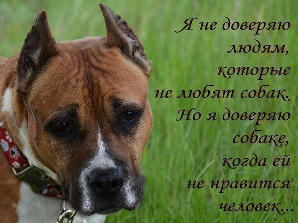 картинки цитаты про собак называют ткань, которая