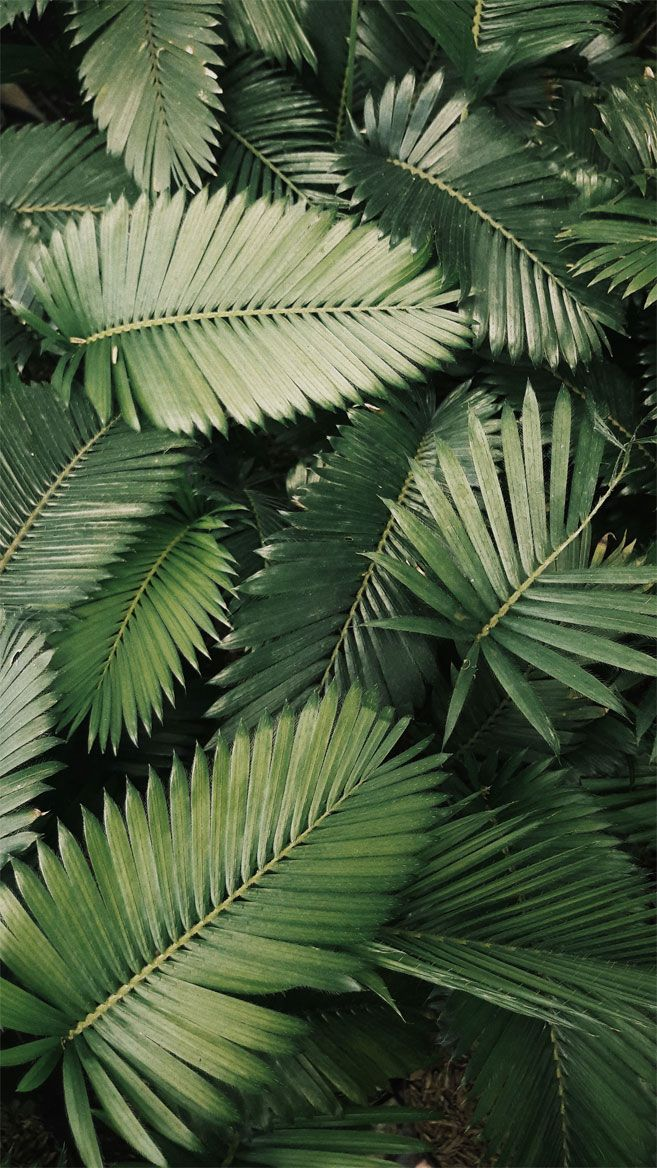 Looking For Beautiful Iphone X Wallpapers That Have A Calming Affect Then Check Out These Tropical Leaves Plant Aesthetic Plant Wallpaper Jungle Photography
