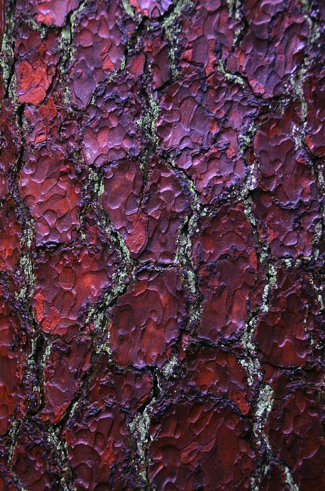 Bark by Watze D. de Haan